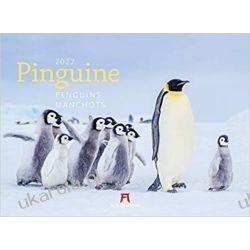 Kalendarz z pingwinami Penguins 2022 Calendar Książki i Komiksy