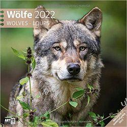 Kalendarz z wilkami Wilki Wölfe Kalender 2022 - 30x30 Wolves Calendar Książki i Komiksy