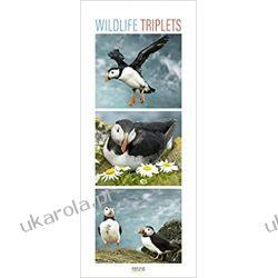 Kalendarz dzikie zwierzęta Wildlife Triplets 2022 calendar Książki i Komiksy