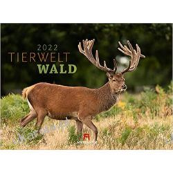 Kalendarz zwierzęta lasu Tierwelt Wald Kalender 2022 calendar