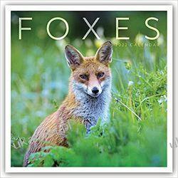 Kalendarz Lisy Foxes Calendar 2022