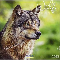 Kalendarz z wilkami Wölfe 2022 calendar wolves Książki i Komiksy