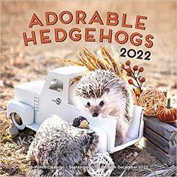 Jeże Adorable Hedgehogs 2022 Calendar Gadżety i akcesoria
