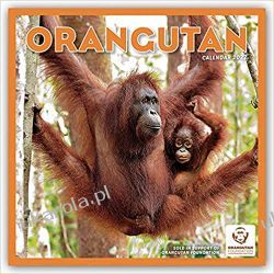 Orangutan 2022 Calendar Gadżety i akcesoria
